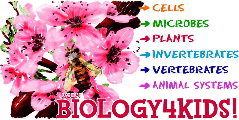 Biology4Kids Sections