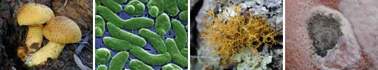 Images of Microbes