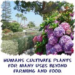 Biology4kids Com Plants Man And Plants